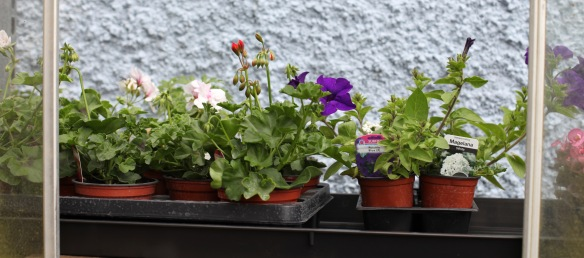Plants for potting 5