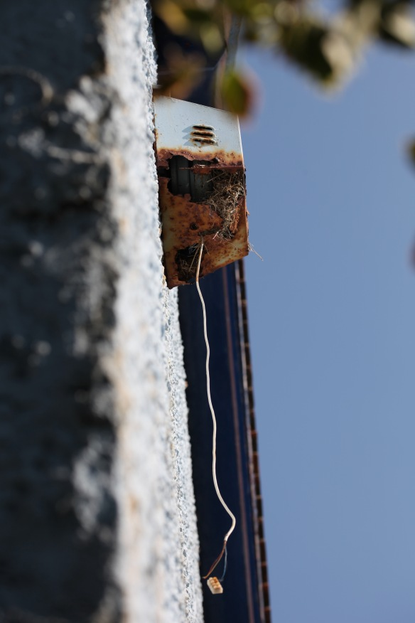 Sparrows' nest in burglar alarm