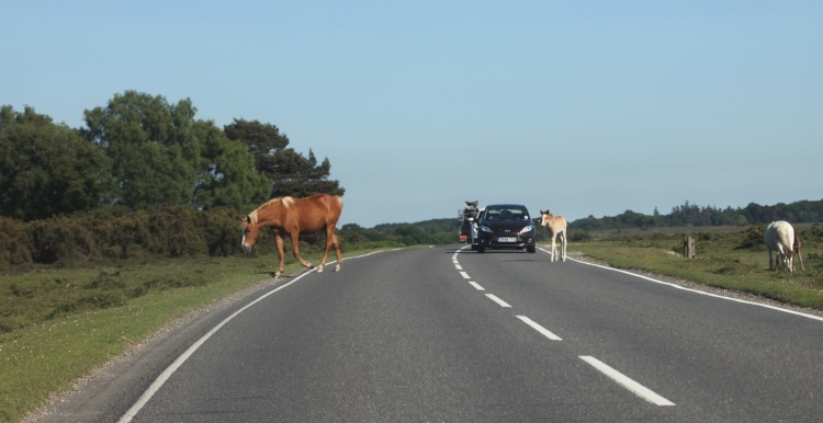 Mare and foal crossing road 1