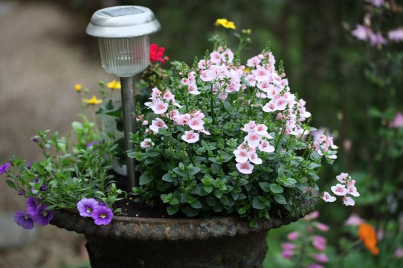 Diascias and petunias in iron urn
