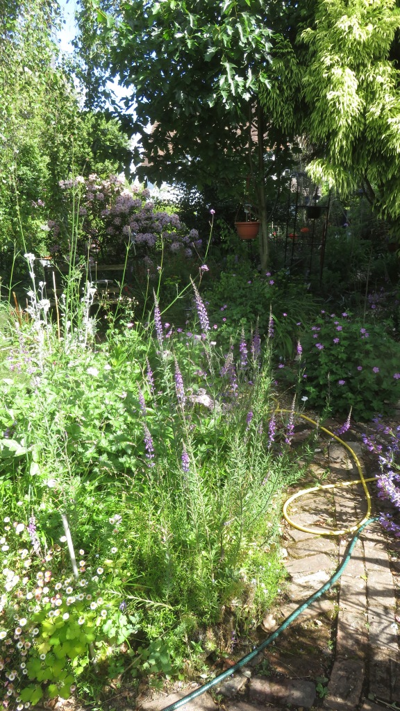 Garden view from Weeping Birch Bed