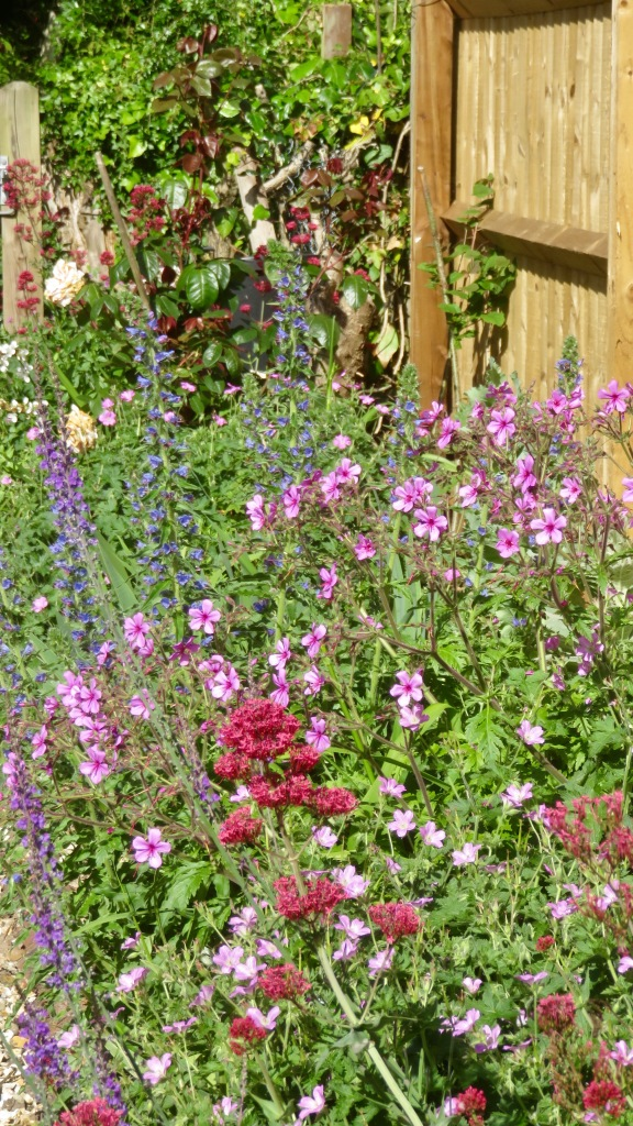 Herbaceous border 1