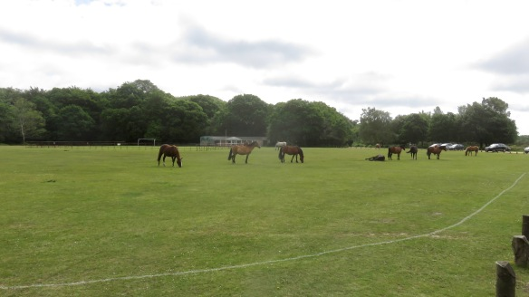 Ponies on outfield 1