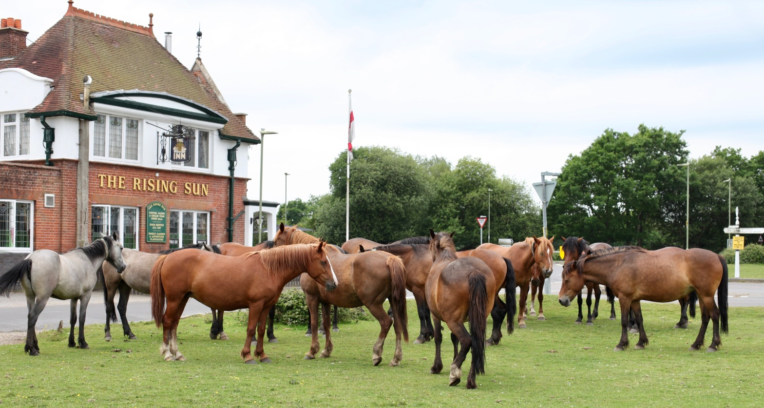 ponies outside The Rising Sun