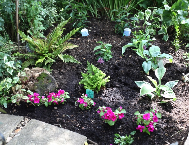 Planting in Dragon Bed
