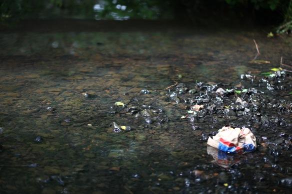 Rubbish in stream