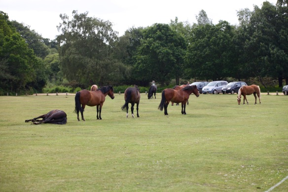 Ponies on outfield 2