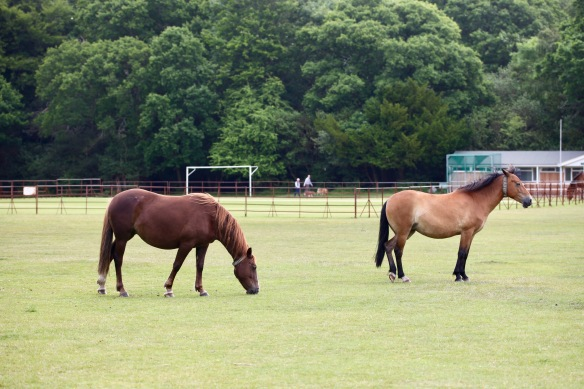 Ponies on outfield 4
