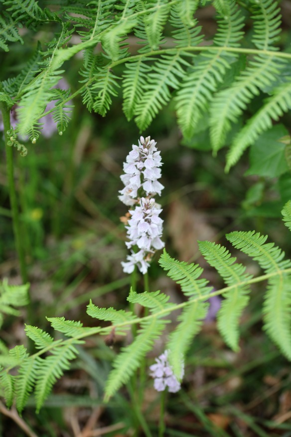 Orchids and ferns 1