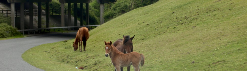 Foal and ponies