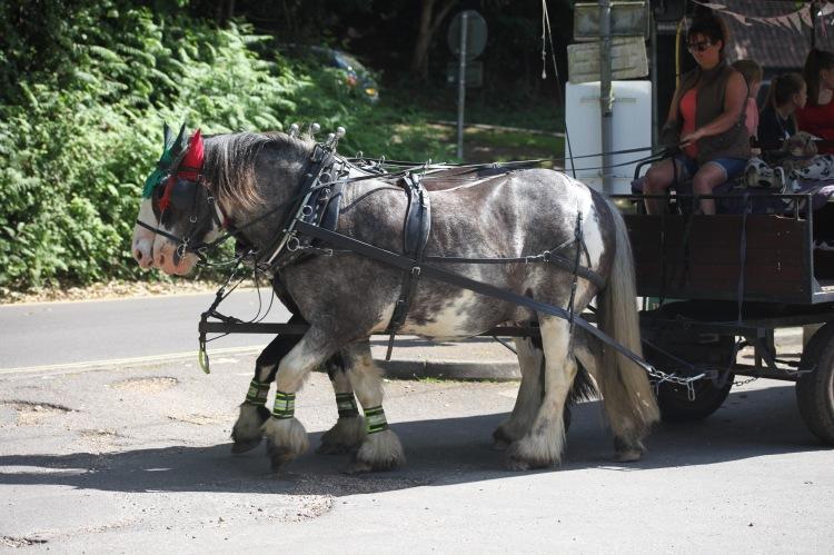 Burley Wagon Rides 2