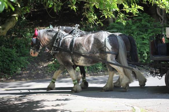 Burley Wagon Rides 3