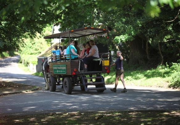 Burley Wagon Rides 4