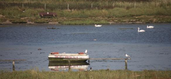 The Bill Smith Tern Raft