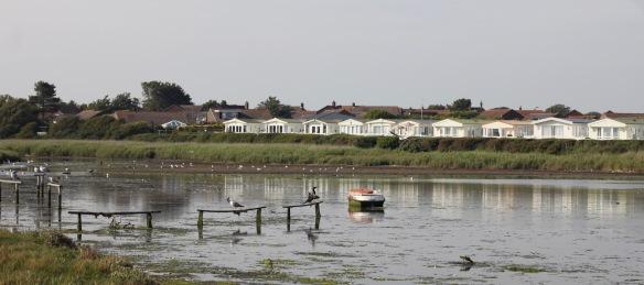 Sturt Pond's birds