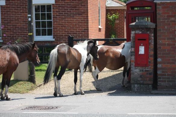 Ponies 3