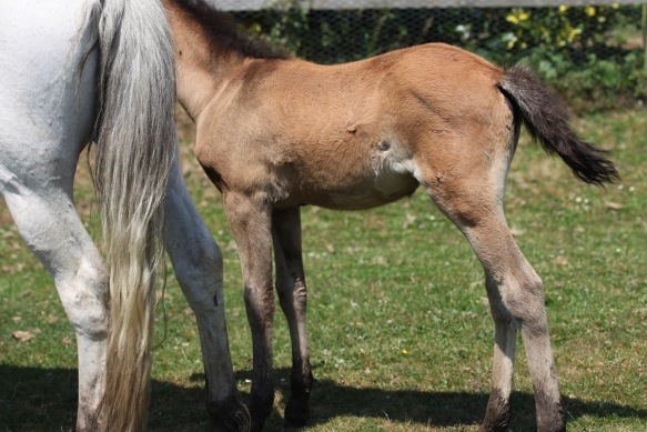 Foal and mare 1