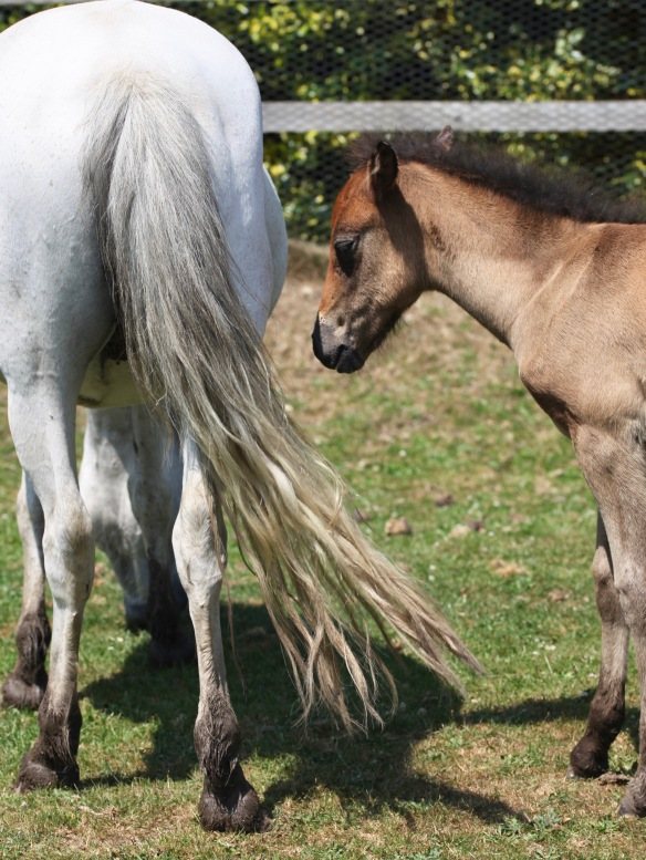 Foal and mare 3