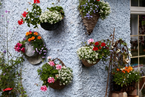 Kitchen wall planting 1