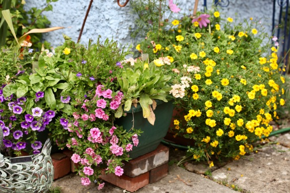 Kitchen corner planters featuring petunias, violas, and bidens