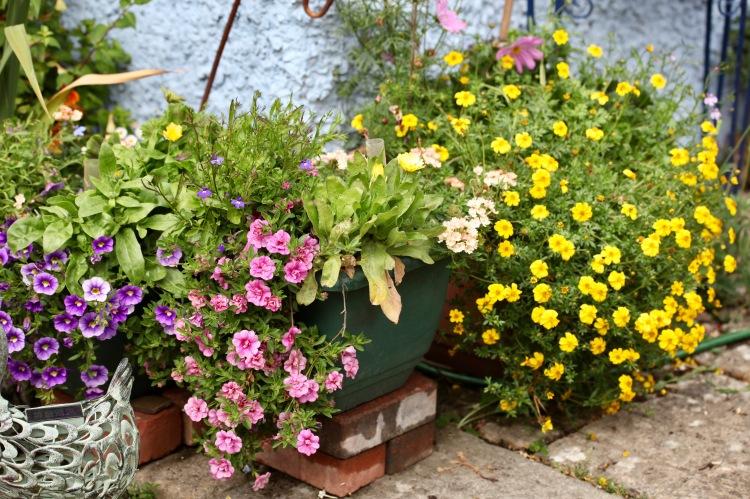 Kitchen corner planters featuring petunias, violas, and bidens