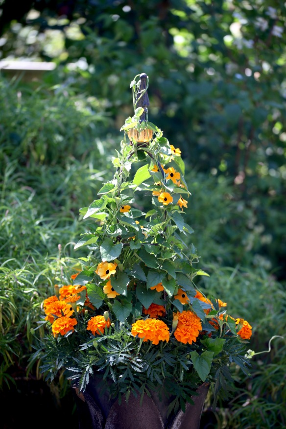 Marigolds and black-eyed Susan