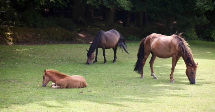 Ponies and foal 1
