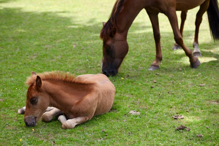 Foal and pony 1