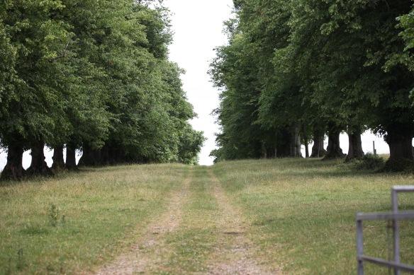 Hale Park
