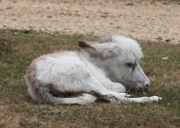 Donkey foal 4