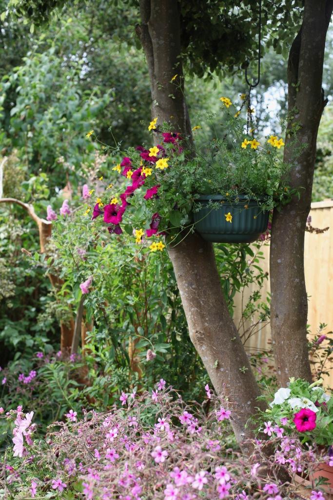 Petunias, bidens, cosmoses, geranium palmatums