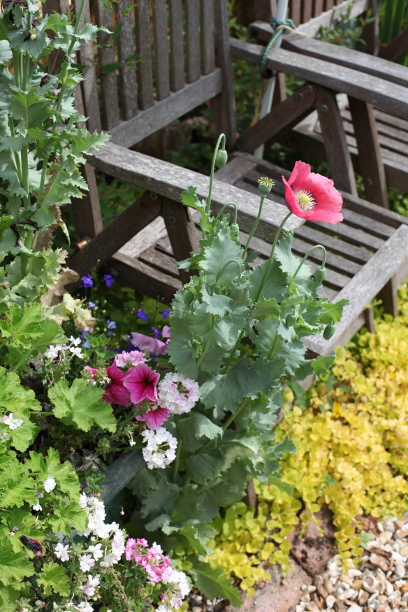 Petunias, poppies,