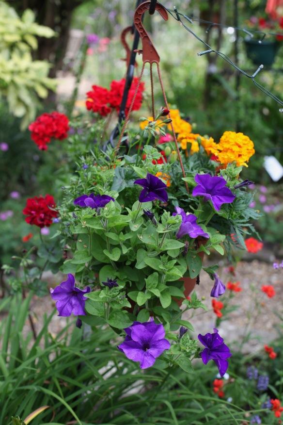 Petunias, marigolds