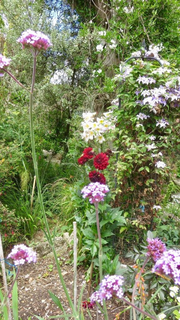 New Bed garden view