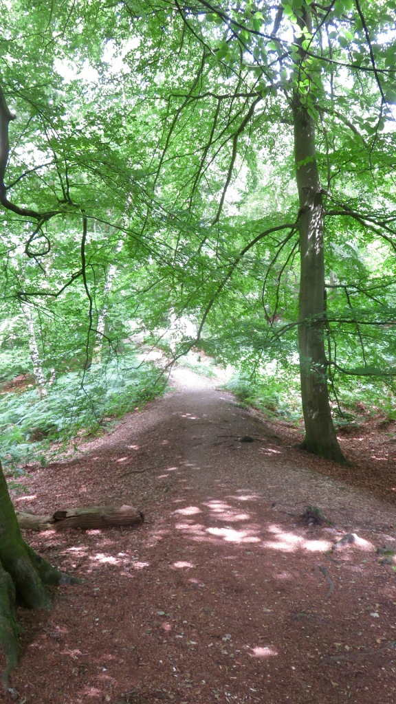 Buckland Hill Fort path 2