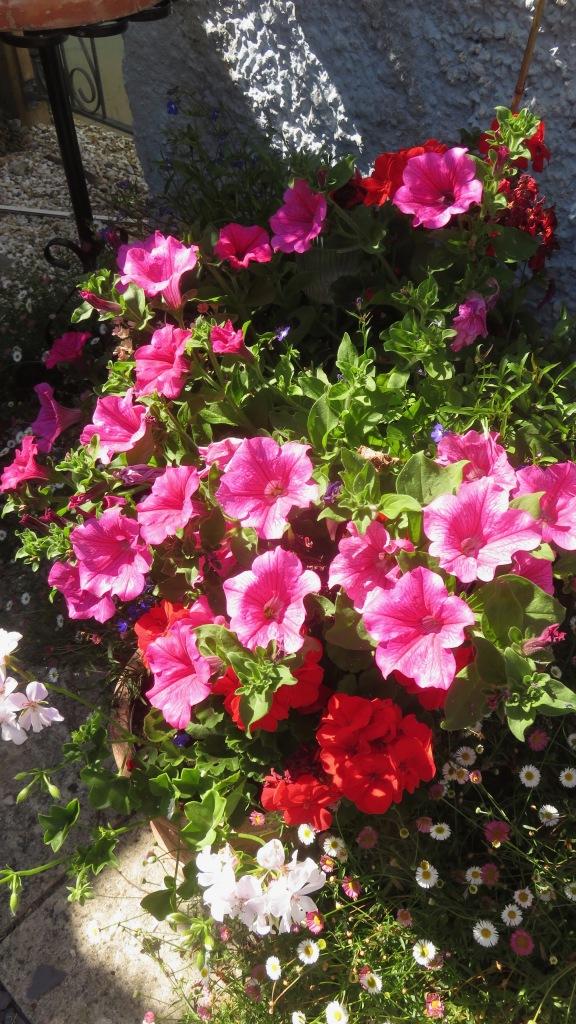 Petunias, geraniums, erigeron