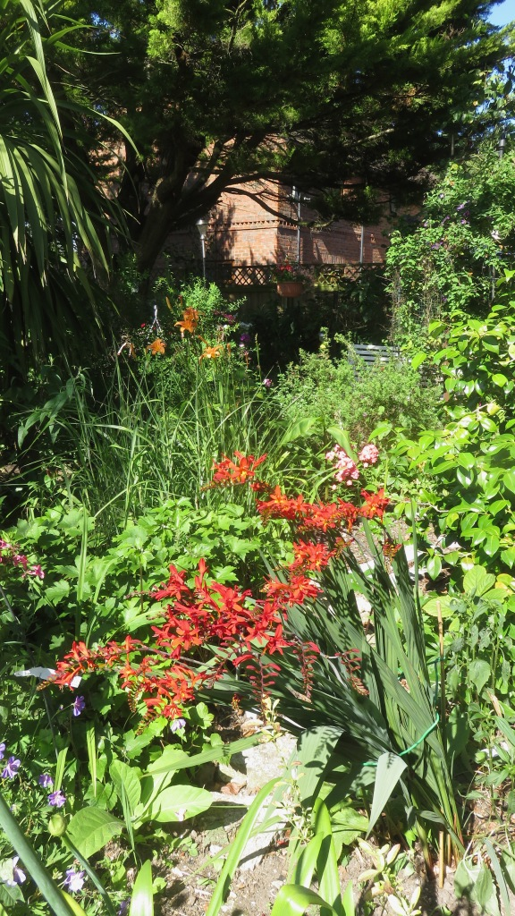 Crocosmia Lucifer etc