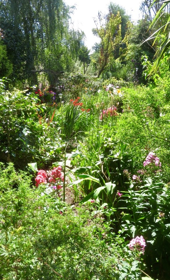 Garden view across Palm Bed