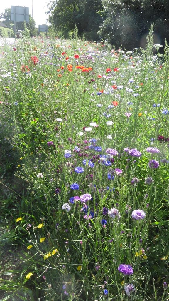 Wildflower meadow wide view 2