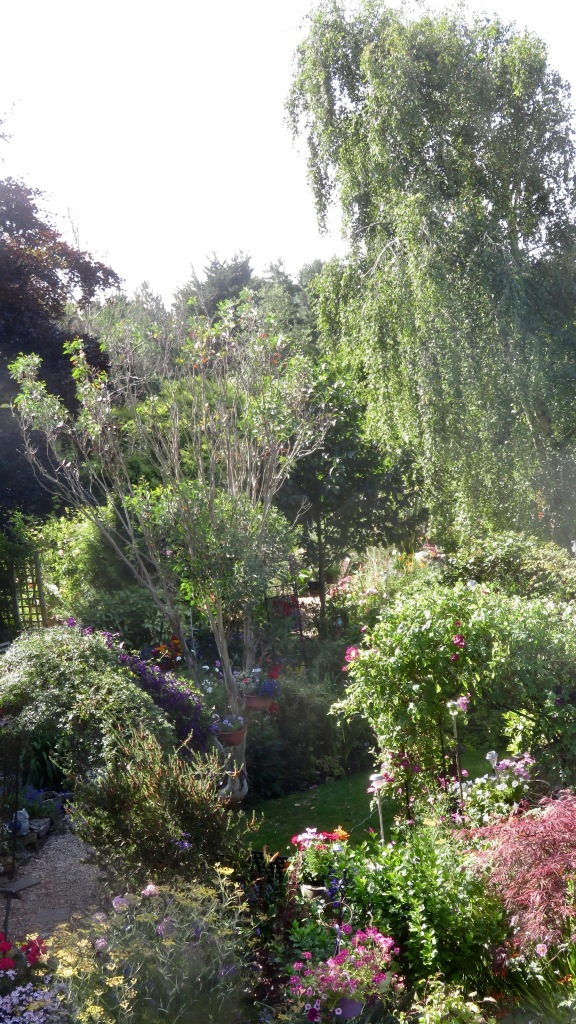 Garden view from Dressing Room window 2