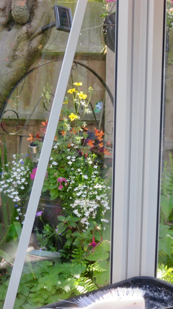 View through greenhouse window 5