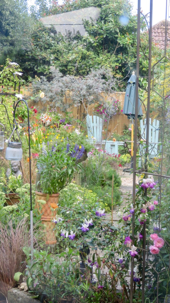 View through greenhouse window 7
