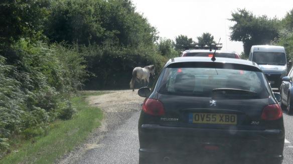 Ponies in traffic 1