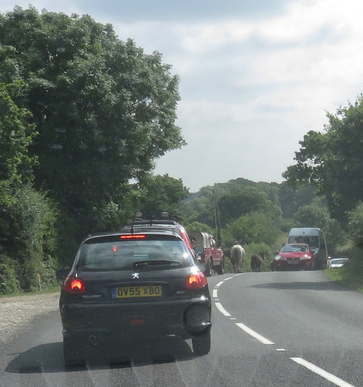 Ponies in traffic 2