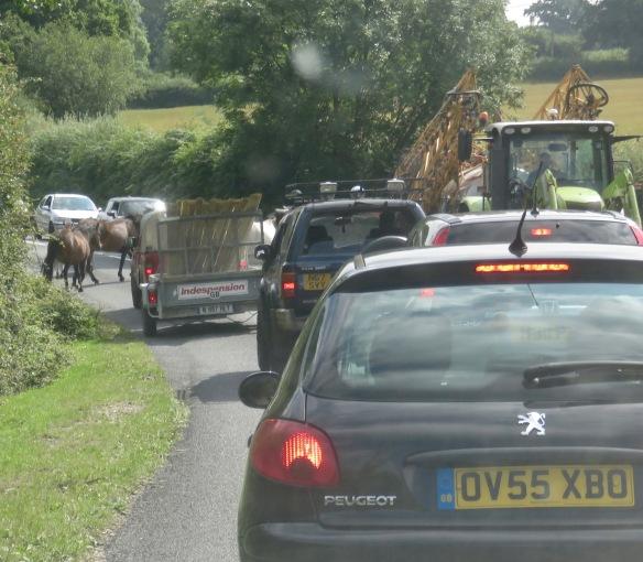 Ponies in traffic 4