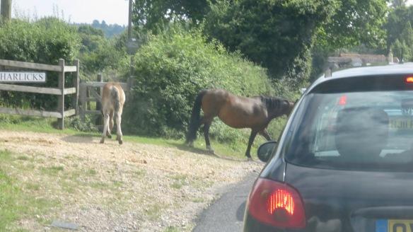 Ponies in traffic 5