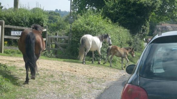 Ponies in traffic 6