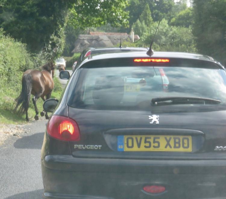 Ponies in traffic 7