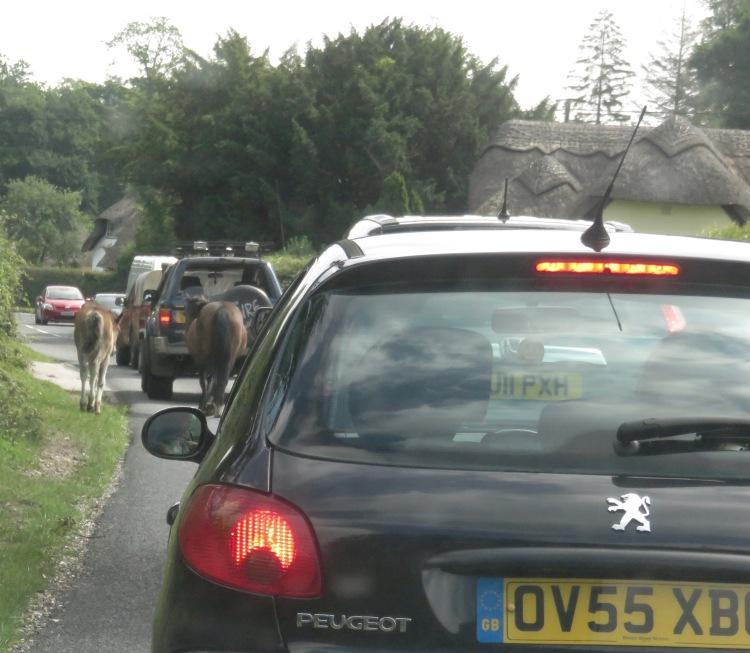 Ponies in traffic 11