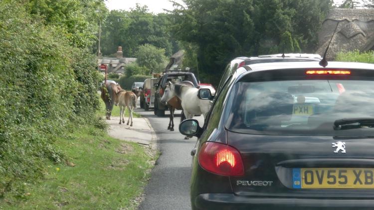 Ponies in traffic 12